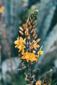 Close up of a bunch of buds and yellow flowers