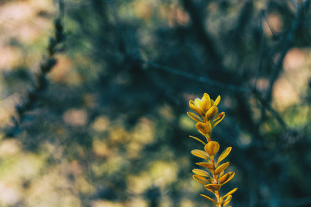 Close up of an isolated yellow plant