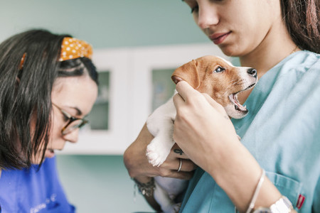 Veterinary with a dog for a review in the clinic