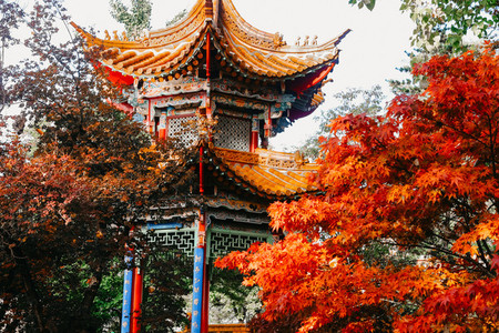 Fall in China Garden Zurich Sw 1