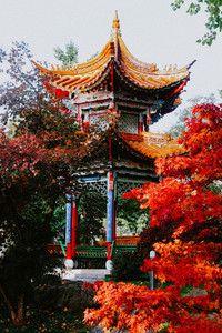Fall in China Garden  Zurich  Sw 2