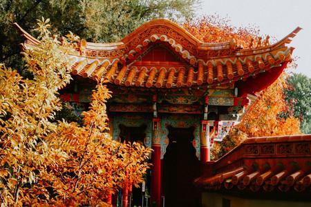 Fall in China Garden  Zurich  Sw 3