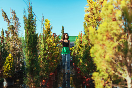 Woman gardener checking out the cypress trees in the plant nursery