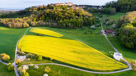 Aerial View of the yellow flower fields in the canton of Zurich during spring  Switzerland
