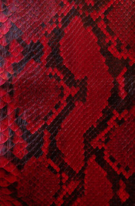 background from red python texture
