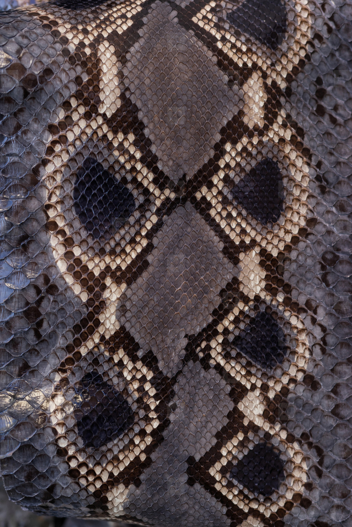 background from natural python texture