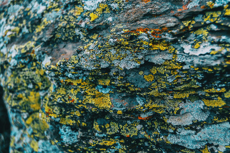 Macro of yellow lichens on a rock wall