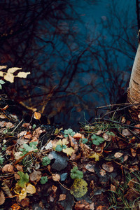 Moody nature photography with dark water and ground with fallen leaf  Autumn season  top view