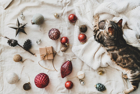 Flat lay of Christmas festive decoration toys and tiger cat