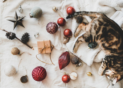 Christmas festive decoration toys and home cat lying on sweater