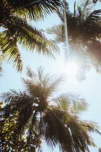 Tropical trees on a summer day