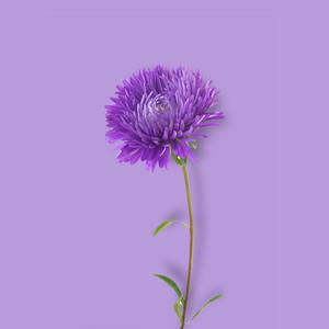 Flower Background 5