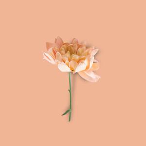 Flower Background 8
