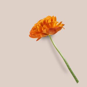 Flower Background 9