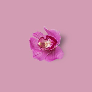 Flower Background 10