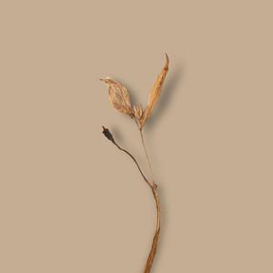 Dried Flower Background