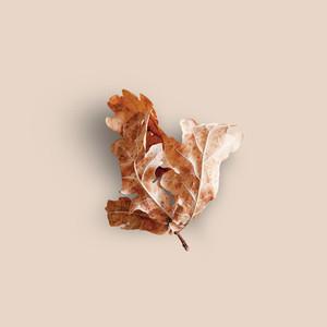 Dried Leaf Background