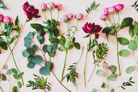 Flat lay of purple peonies  pink roses and branches with leaves