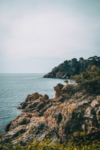 Vertical landscape of a rocky coast with some vegetation