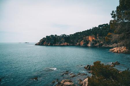 Landscape of an abrupt breakwater full of trees in the sea