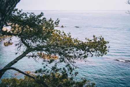 Close up of some branches of a tree with the mediterranean sea on the background