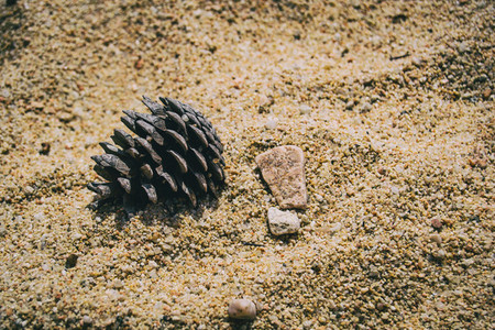 Detail of a pinecone and a pebble on the sand