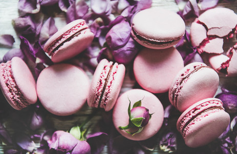 Sweet pink macaron cookies and lilac rose buds and petals