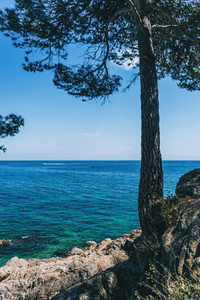 Close up of a tree on a beautiful seascape