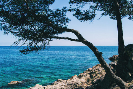 Close up of a twisted tree on a beautiful seascape