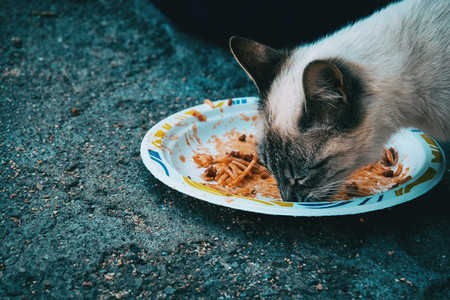 Close portrait of a cat eating a pasta dish on the street