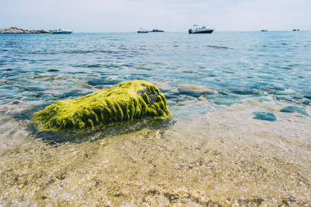 Seascape with an isolated rock completely covered in green algae on the shore