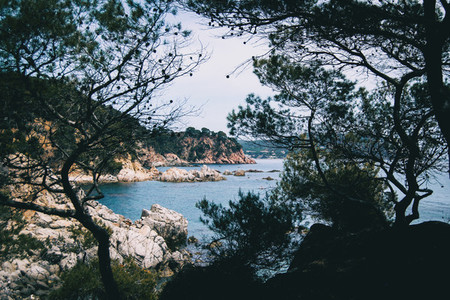 Landscape of a steep coast framed by some tree silhouettes