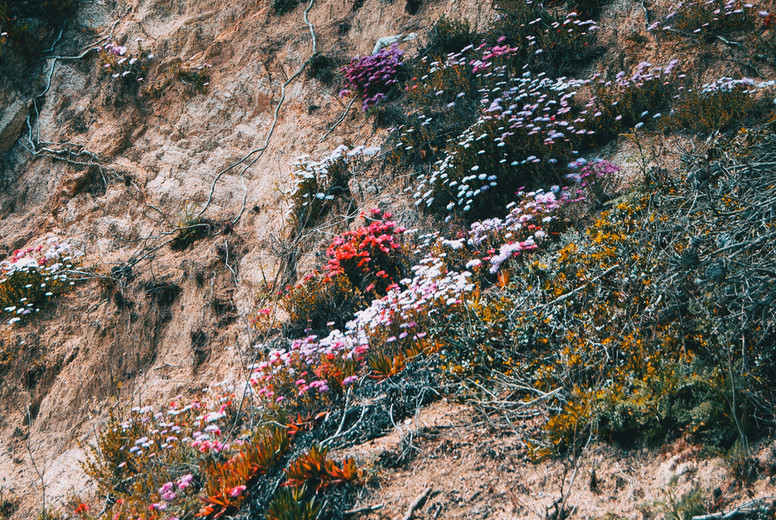 A hillside covered in colorful flowers and roots growing wildly