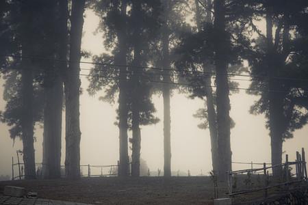 Trees and mist