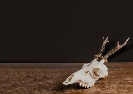 Bohemian Skull  2