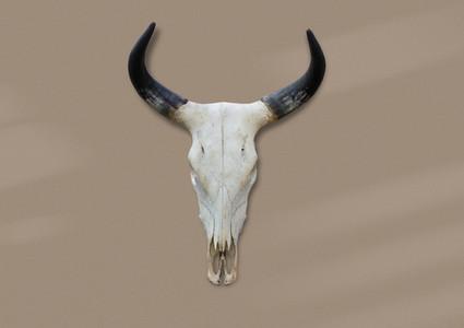 Bohemian Skull  5