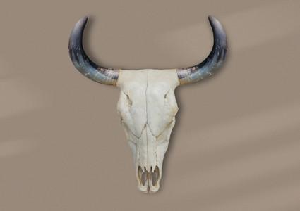 Bohemian Skull  6