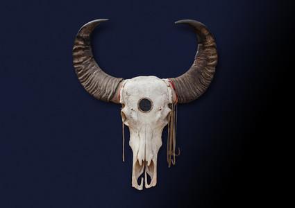 Bohemian Skull  8