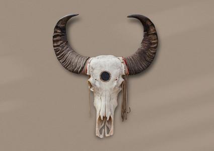 Bohemian Skull  7