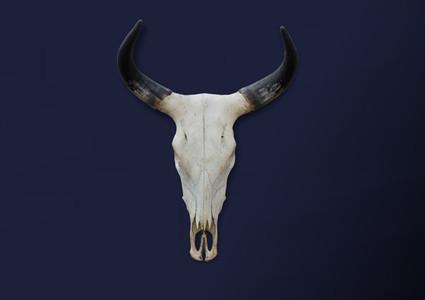 Bohemian Skull  9