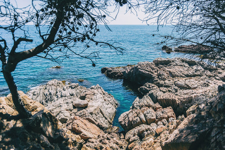 Seascape of a steep rocky coast framed by some peeled tree branches