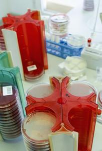 Petri dish stacks in science laboratory