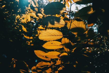 orange leaves on an autumn day