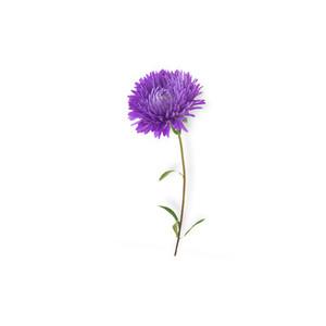 Cut Flower 4