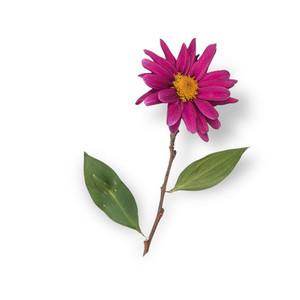 Cut Flower 11