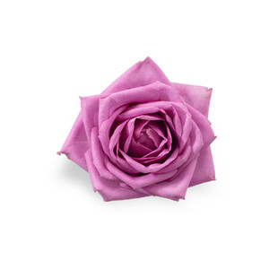 Cut Flower 12