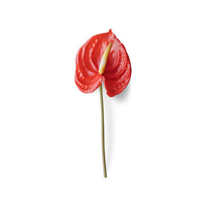 Cut Flower 13