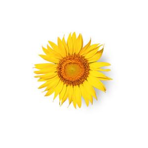 Cut Flower 14