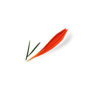 Cut Flower 3