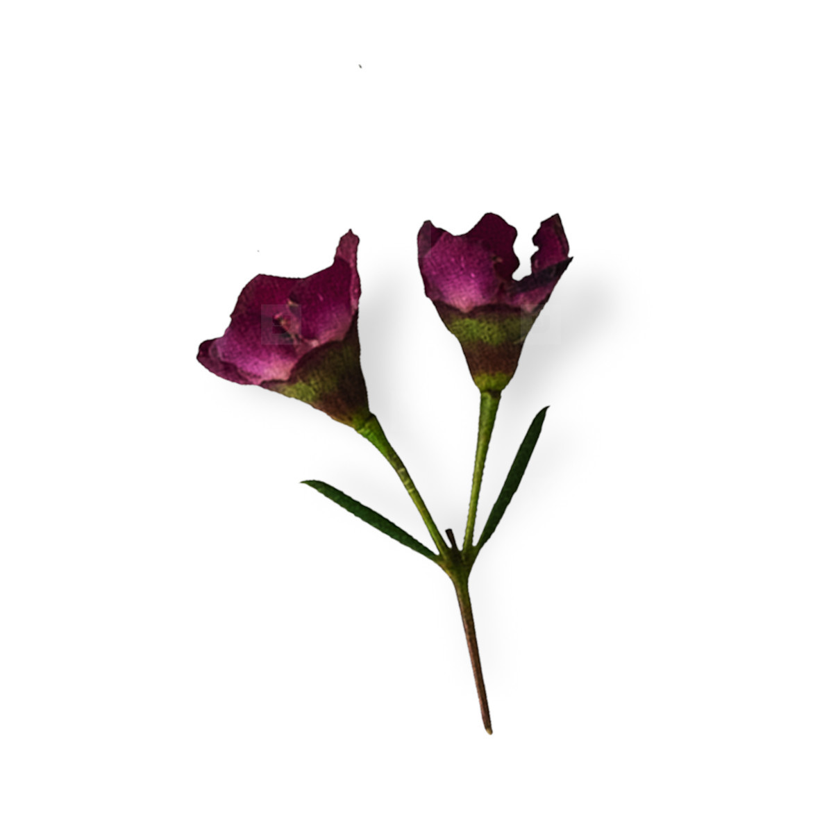 Cut Flower 5